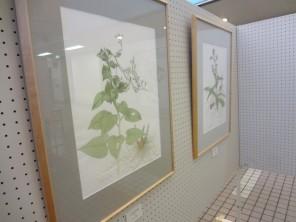 bc_141119_野生植物展ボタニカルアート市役所11