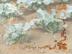bc_170512_〆市民農園利用者 追加募集2